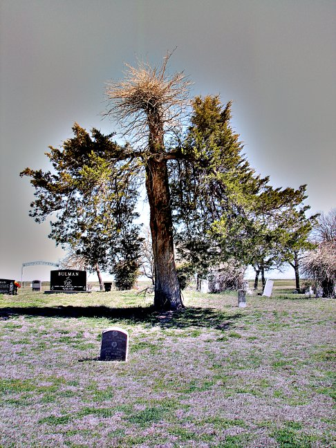 Tree - Minter's Chapel Cemetary - Euless, Texas (2007)