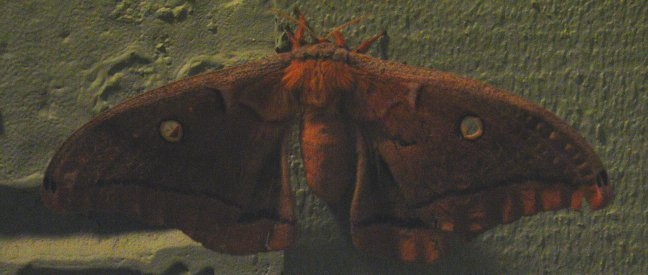 Cool Moth - Colleyville, Texas (2007)